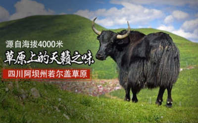 四川阿坝汶川县牛肉干 6-12个月