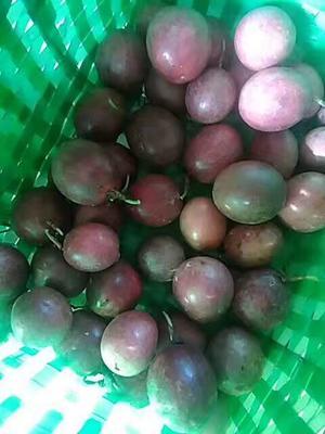 广西玉林北流市紫香一号百香果 50 - 60克