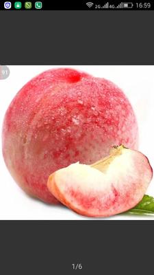 河北衡水桃城区水蜜桃 70mm以上 3 - 4两