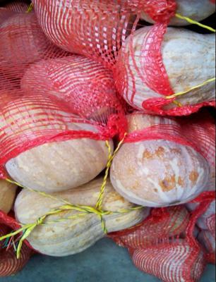 这是一张关于金红冠南瓜 1~2斤 扁圆形的产品图片