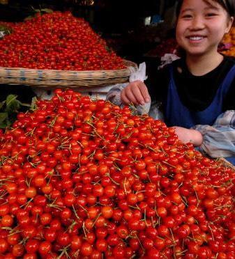 这是一张关于红灯樱桃 22-24mm 8-12g的产品图片