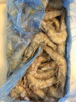 广东广州荔湾区厄瓜多尔白虾