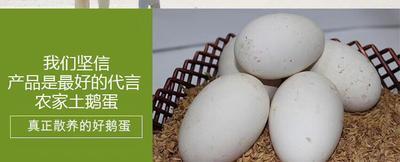 福建漳州诏安县狮头鹅蛋 食用 箱装