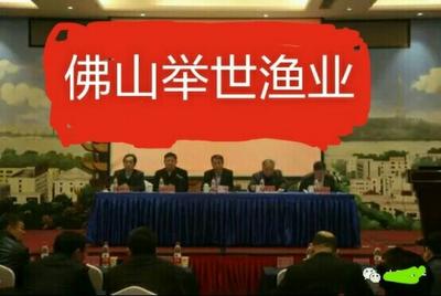 广东佛山高明区异育银鲫 人工养殖 0.05龙8国际官网官方网站