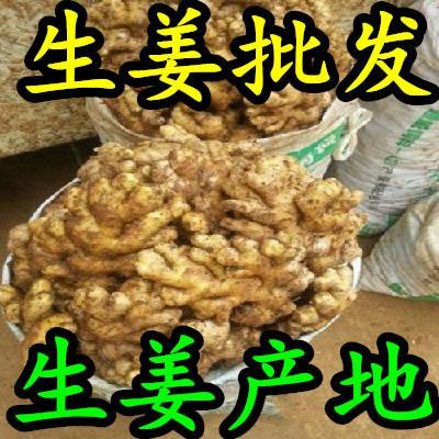 山东临沂沂水县姜种 带土 6两以上