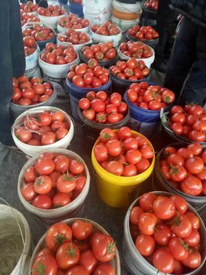 山东潍坊安丘市大红硬果 不打冷 大红 通货