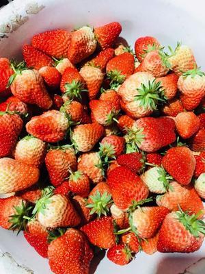 江苏连云港东海县红颜草莓 20克以上