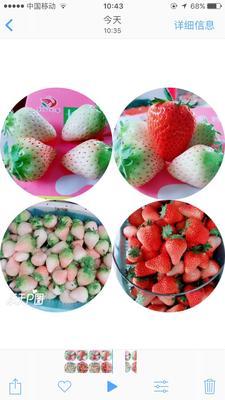 安徽合肥长丰县红颜草莓 30克以上