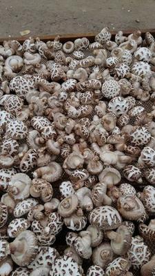 湖北省随州市曾都区花菇 2.6 - 3.0cm 一级