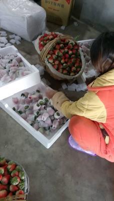 安徽淮南谢家集区红颜草莓 20克以下