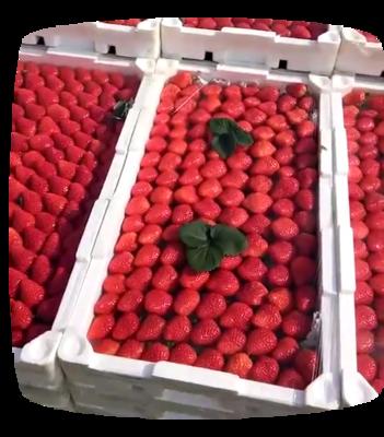 山东烟台栖霞市佐贺清香草莓 30克以上