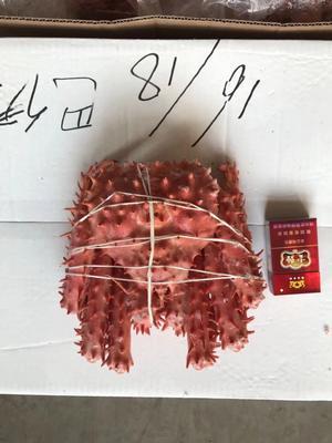 北京丰台区冻帝王蟹