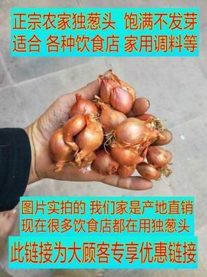 广东省惠州市博罗县葱仔