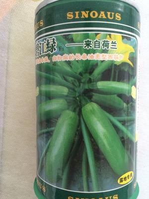 云南省昆明市官渡区西葫芦种子