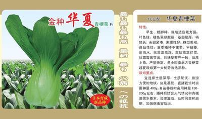 河南省郑州市惠济区青梗菜种子