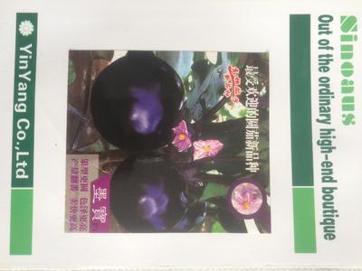 云南省昆明市官渡区茄子种子