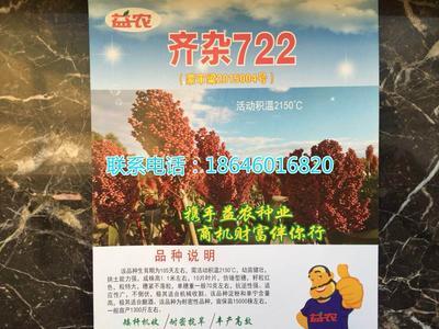黑龙江省哈尔滨市双城市齐杂722 种子