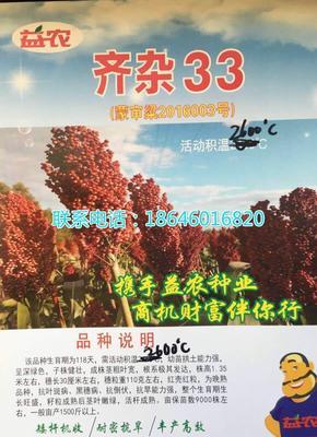 黑龙江省哈尔滨市双城市齐杂33 种子