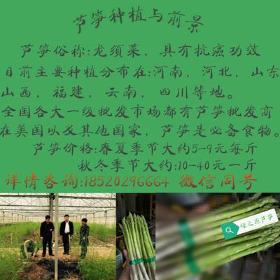 山东省潍坊市潍城区芦笋种子