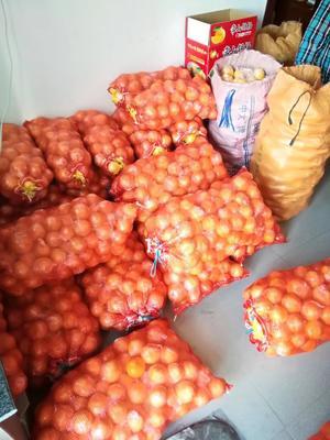 浙江省杭州市西湖区胡柚 1斤以下