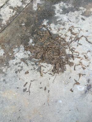 安徽省六安市寿县野生水蛭
