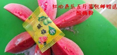 福建省漳州市长泰县红心芭乐 200-250克