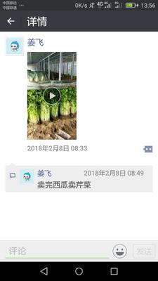 山东省青岛市黄岛区马家沟芹菜 60cm以上 大棚种植 0.5~1.0斤