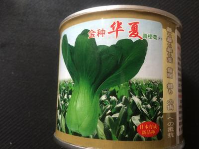 云南省昆明市官渡区青梗菜种子
