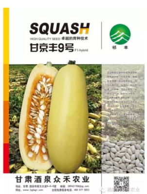 甘肃省酒泉市肃州区西葫芦种子