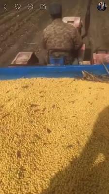黑龙江省齐齐哈尔市克东县黄豆种子