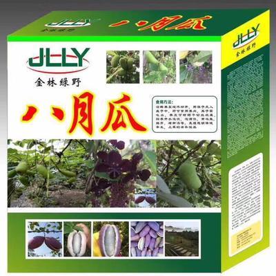江苏省宿迁市宿豫区紫色一号八月瓜 种植 150g以上