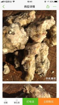 广西壮族自治区桂林市全州县松香