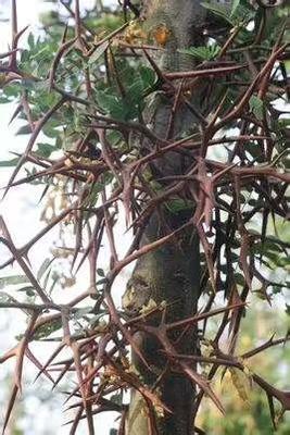 湖北省随州市曾都区皂角树