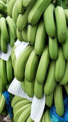 云南省红河哈尼族彝族自治州建水县河口香蕉 七成熟 40 - 50斤