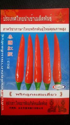 河南省郑州市金水区朝天椒种子 95%以上 杂交种