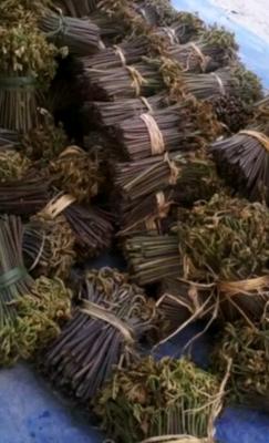 贵州省黔南布依族苗族自治州都匀市野生蕨菜