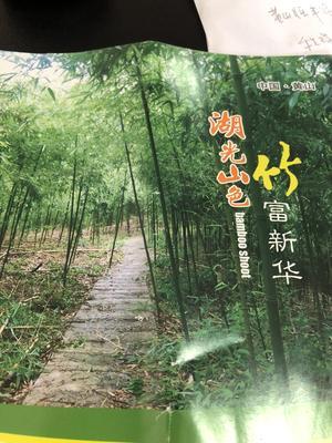 这是一张关于雷竹春笋 30cm以上 鲜笋的产品图片