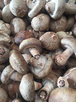 这是一张关于西峡香菇 4.5~5.0cm 一级的产品图片
