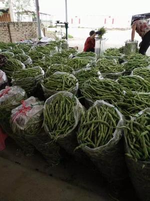广西壮族自治区北海市合浦县白花四季豆 20cm以上