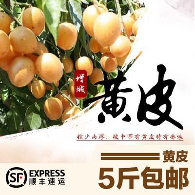 广东省广州市增城区甜酸黄皮 球型