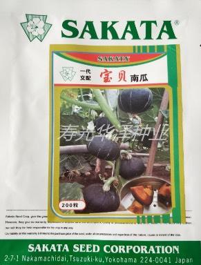 山东省潍坊市寿光市宝贝小南瓜种子贝贝 95%