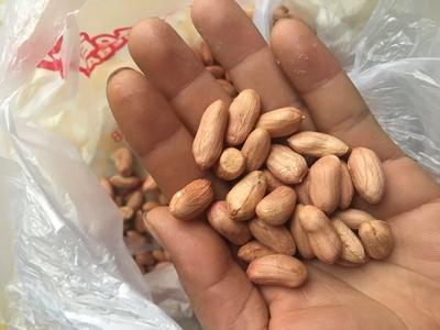 河南省驻马店市确山县花生果 散装 3-6个月
