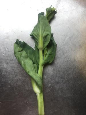 湖北省黄冈市黄梅县白菜苔 15~20cm