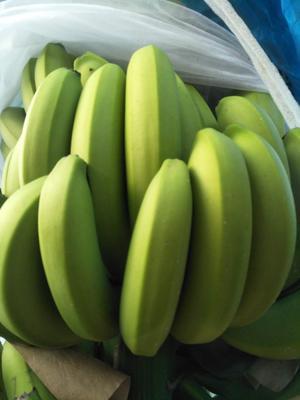 云南省西双版纳傣族自治州勐海县西双版纳香蕉 八成熟 50 - 60斤