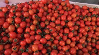 福建省福州市福清市409小柿子