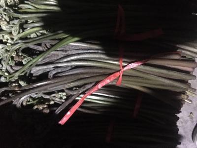重庆江北区野生蕨菜