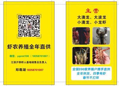 浙江省温州市鹿城区清水小龙虾 人工殖养 7-9钱