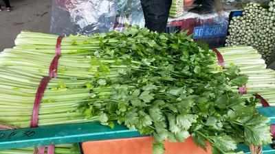 河北省邯郸市永年县西芹 50~55cm 大棚种植 0.5~1.0斤