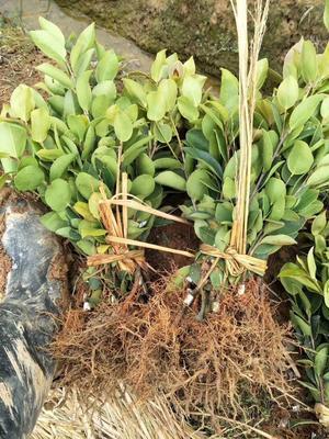 这是一张关于长林系列的产品图片