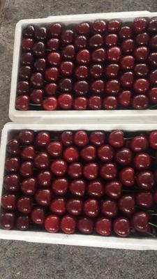 这是一张关于美早樱桃 24-26mm 12-15g的产品图片